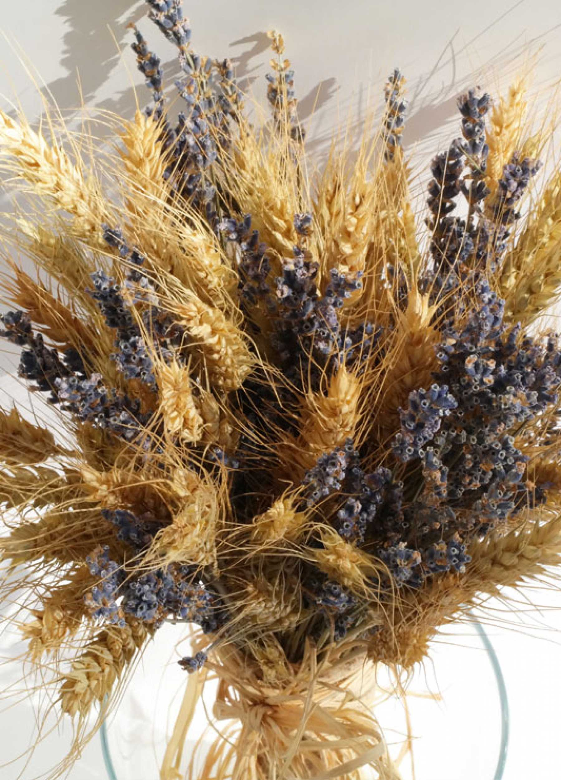 Buğday Gelin Çiçeği Nasıldır?